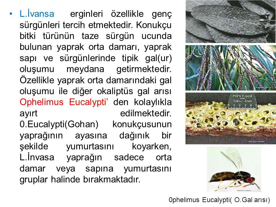 L.İvansa erginleri özellikle genç sürgünleri tercih etmektedir. Konukçu bitki türünün taze sürgün ucunda bulunan yaprak orta damarı, yaprak sapı ve sü