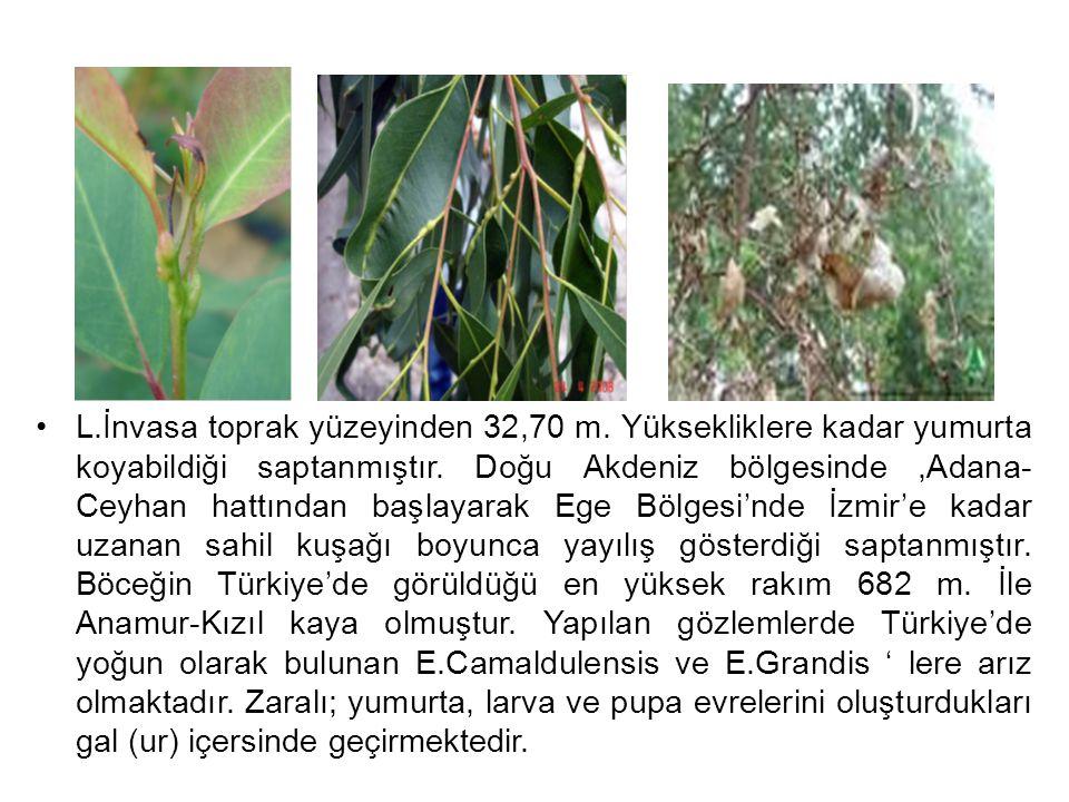 L.İnvasa toprak yüzeyinden 32,70 m. Yüksekliklere kadar yumurta koyabildiği saptanmıştır. Doğu Akdeniz bölgesinde,Adana- Ceyhan hattından başlayarak E