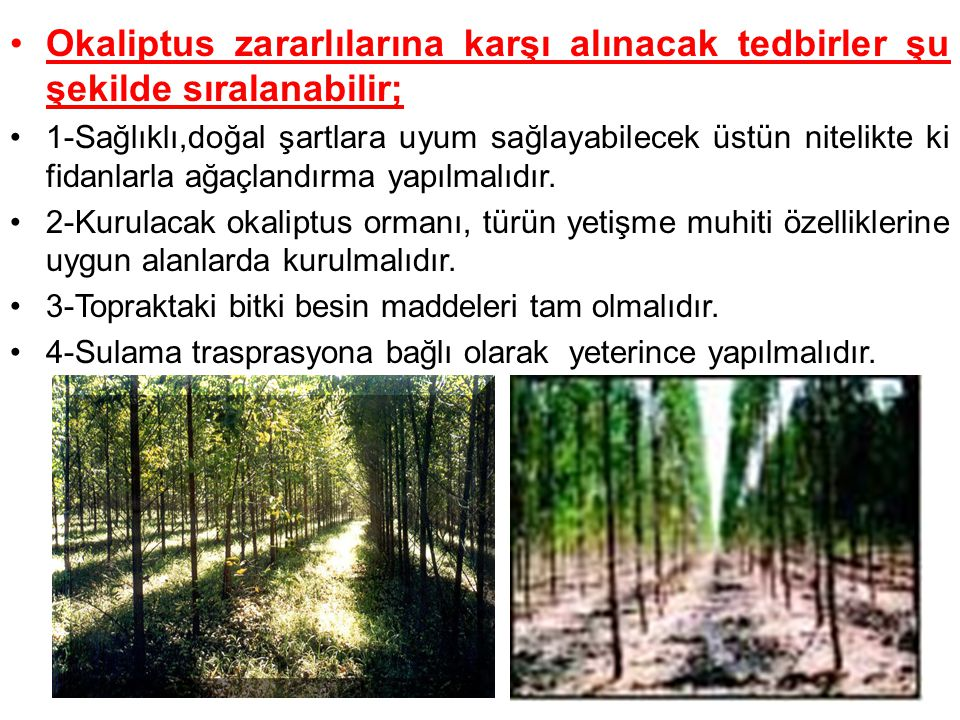 Okaliptus zararlılarına karşı alınacak tedbirler şu şekilde sıralanabilir; 1-Sağlıklı,doğal şartlara uyum sağlayabilecek üstün nitelikte ki fidanlarla