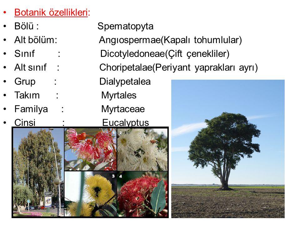 Botanik özellikleri: Bölü : Spematopyta Alt bölüm: Angıospermae(Kapalı tohumlular) Sınıf : Dicotyledoneae(Çift çenekliler) Alt sınıf : Choripetalae(Pe
