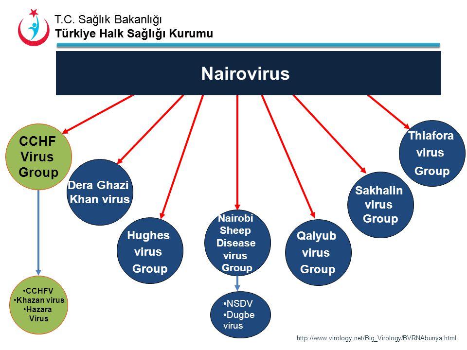 T.C. Sağlık Bakanlığı Türkiye Halk Sağlığı Kurumu T.C. Sağlık Bakanlığı Türkiye Halk Sağlığı Kurumu CCHF Virus Group Dera Ghazi Khan virus Hughes viru