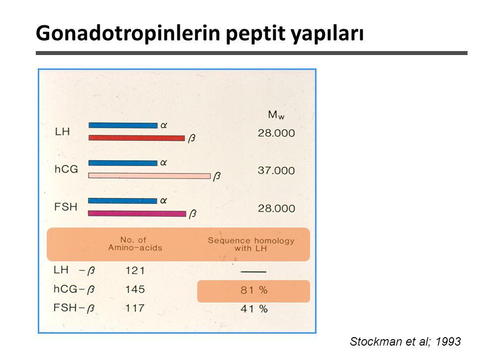 Uygulanım 24 H Serum LH aktivitesi LH hCG rLH-hCG rLH: ~ 1 saat hCG: x6-8 kat