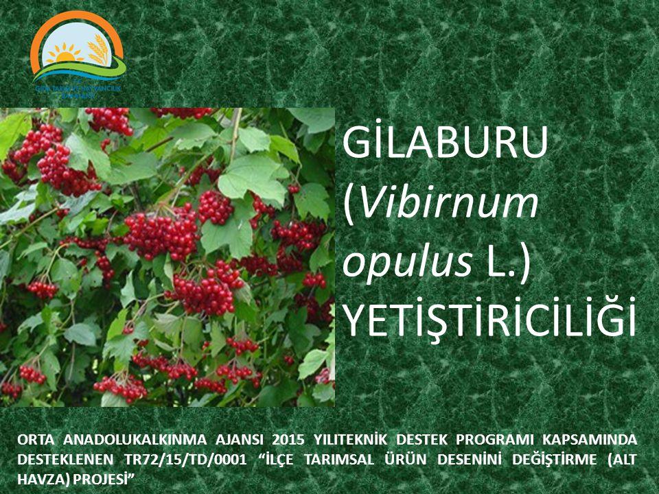 Gilaburu çalı şeklinde bodur bir ağaçtır.Genellikle İç Anadolu da yetişir.