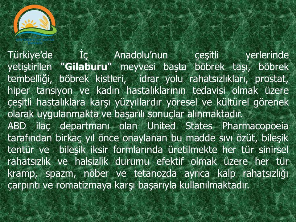 Türkiye'de İç Anadolu'nun çeşitli yerlerinde yetiştirilen