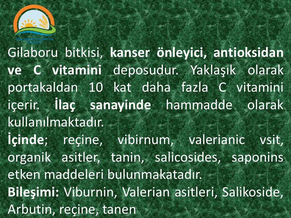 Gilaboru bitkisi, kanser önleyici, antioksidan ve C vitamini deposudur. Yaklaşık olarak portakaldan 10 kat daha fazla C vitamini içerir. İlaç sanayind