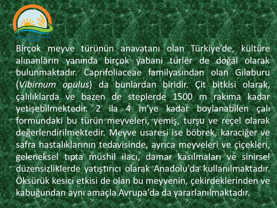 Birçok meyve türünün anavatanı olan Türkiye'de, kültüre alınanların yanında birçok yabani türler de doğal olarak bulunmaktadır. Caprifoliaceae familya