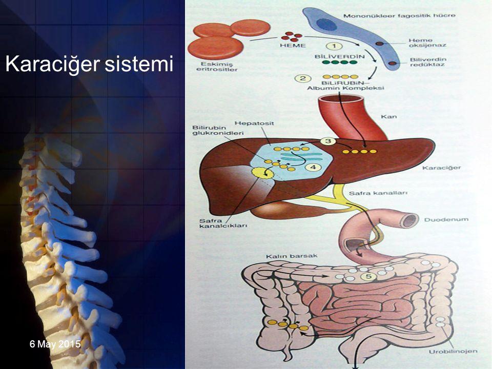 6 May 2015DAÜ FZR3 Karaciğer sistemi