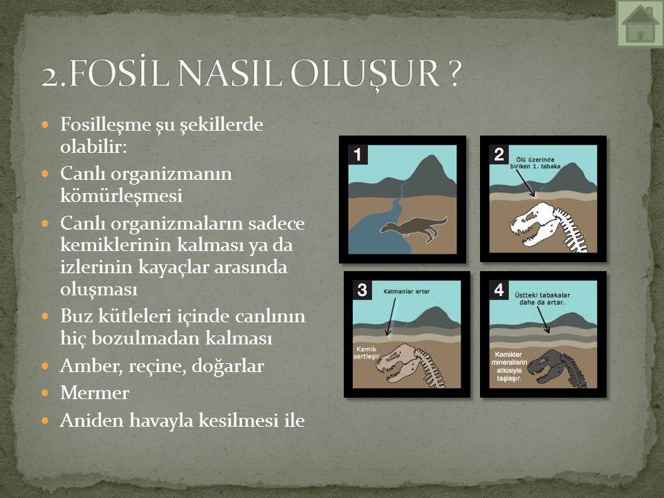 Fosilleşme şu şekillerde olabilir: Canlı organizmanın kömürleşmesi Canlı organizmaların sadece kemiklerinin kalması ya da izlerinin kayaçlar arasında