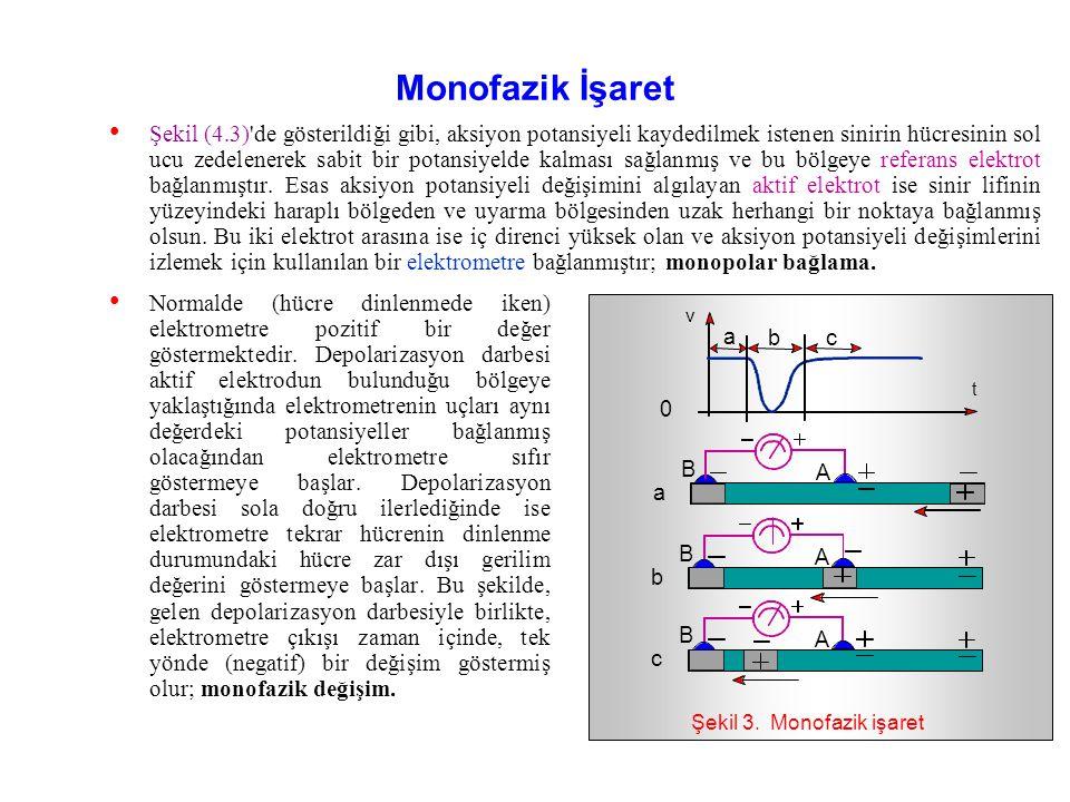 Sinir liflerinden algılanan ve bir aksiyon potansiyeli değişiminin sonucu olarak ortaya çıkan biyolojik işaret değişimlerine Elektronörogram (ENG) adı