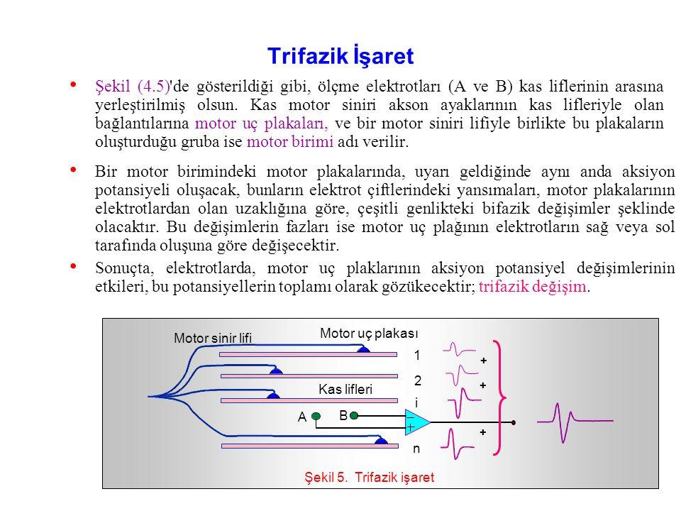 Bu şekle göre, aksiyon potansiyelinin sola doğru ilerlemesiyle elektrotlardan önce sağdaki (A) soldakine (B) göre daha negatif olur ve bu durumda elek