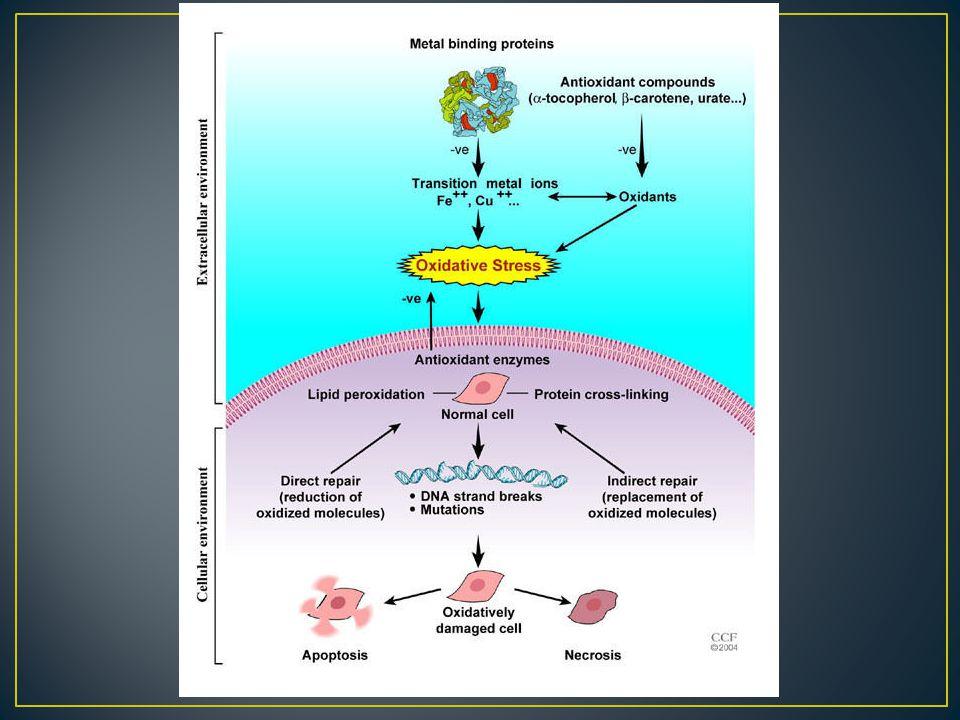 TAC:total antioksidan kapasite OS ölçümü: SOD, konjuge dienler, lipid peroksidler, tiyobarbitürik asid reaktif madde, glutaredoksin, oksidatif DNA ürünlerin ölçümleri, NO metabolitleri(nitrit ve nitrat)