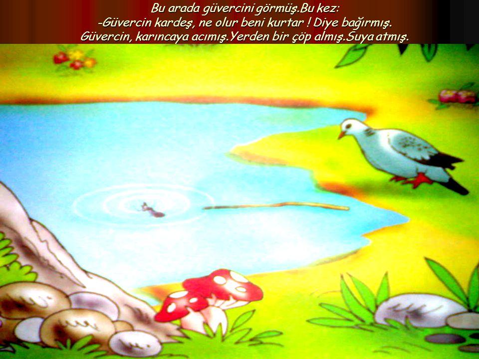 Bu arada güvercini görmüş.Bu kez: -Güvercin kardeş, ne olur beni kurtar ! Diye bağırmış. Güvercin, karıncaya acımış.Yerden bir çöp almış.Suya atmış.