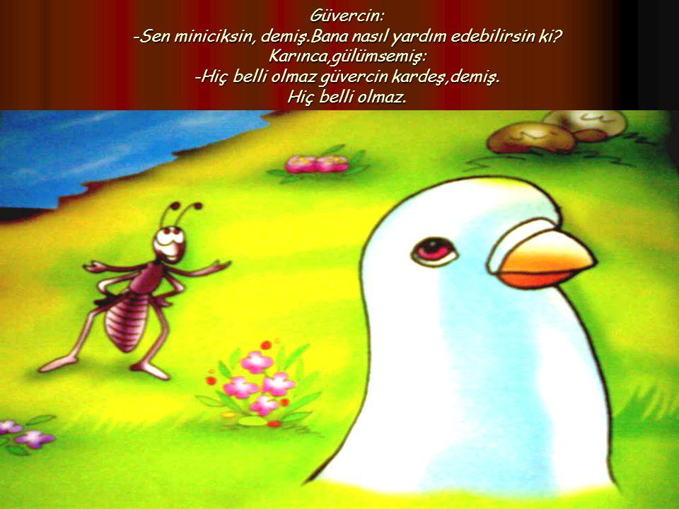 Güvercin: -Sen miniciksin, demiş.Bana nasıl yardım edebilirsin ki? Karınca,gülümsemiş: -Hiç belli olmaz güvercin kardeş,demiş. Hiç belli olmaz.