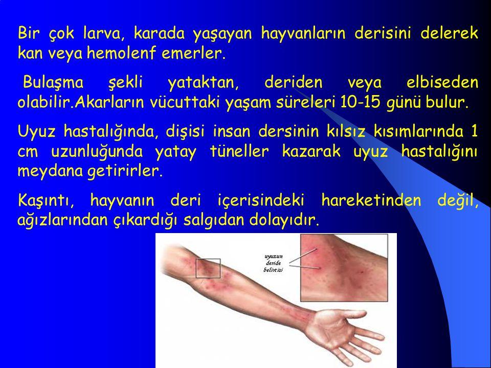 Bir çok larva, karada yaşayan hayvanların derisini delerek kan veya hemolenf emerler. Bulaşma şekli yataktan, deriden veya elbiseden olabilir.Akarları