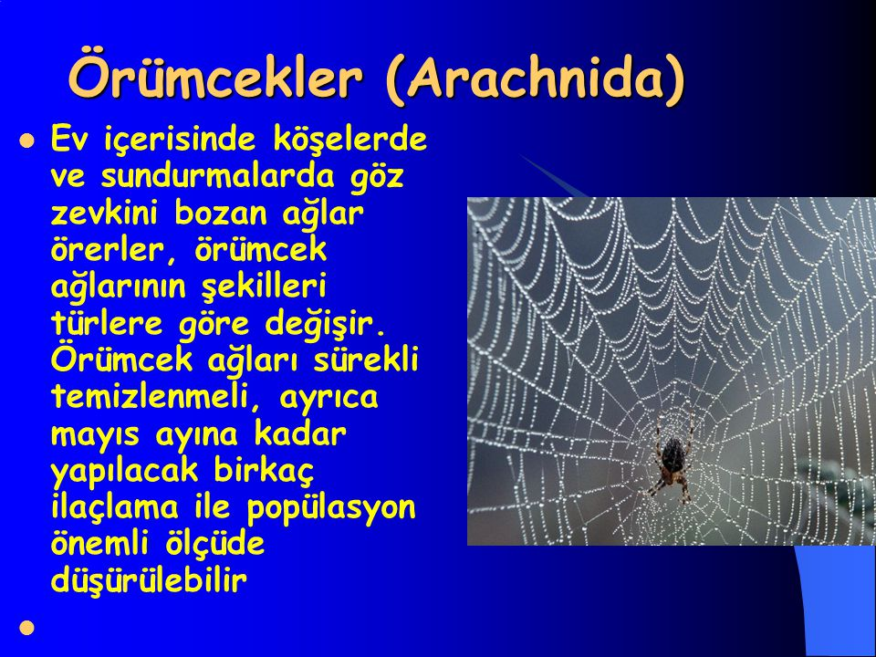 Örümcekler (Arachnida) Ev içerisinde köşelerde ve sundurmalarda göz zevkini bozan ağlar örerler, örümcek ağlarının şekilleri türlere göre değişir.