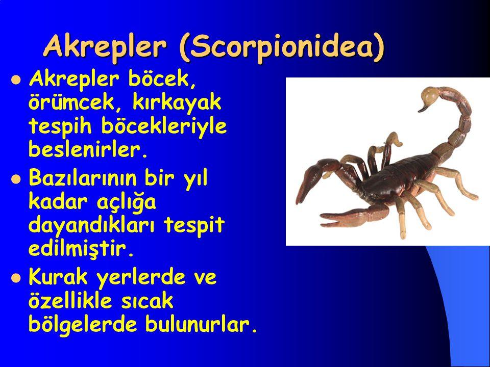 Akrepler (Scorpionidea) Akrepler böcek, örümcek, kırkayak tespih böcekleriyle beslenirler. Bazılarının bir yıl kadar açlığa dayandıkları tespit edilmi