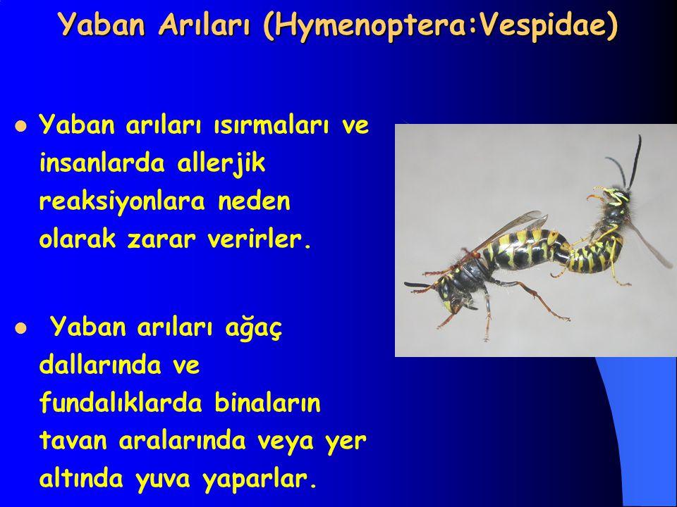 Yaban Arıları (Hymenoptera:Vespidae) Yaban arıları ısırmaları ve insanlarda allerjik reaksiyonlara neden olarak zarar verirler. Yaban arıları ağaç dal