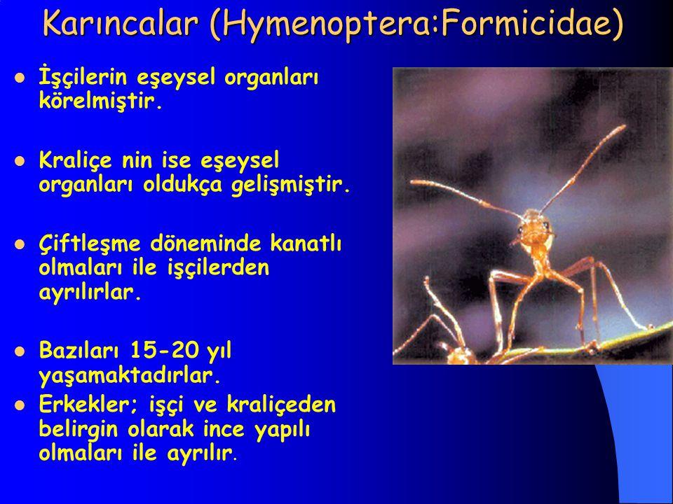 Karıncalar (Hymenoptera:Formicidae) İşçilerin eşeysel organları körelmiştir. Kraliçe nin ise eşeysel organları oldukça gelişmiştir. Çiftleşme dönemind