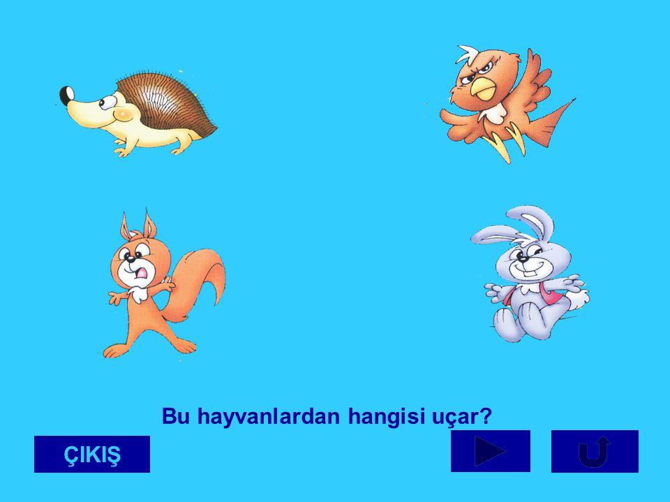 Bu hayvanlardan hangisi uçar? ÇIKIŞ