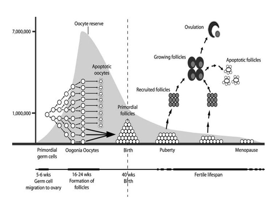 Fertilitenin Korunması 2 ana yöntem; Dondurma (kriyoprezervasyon): Kanser tedavisinin overdeki etkileri azaltmak için yapılan müdahaleler (Mitwally ve ark.