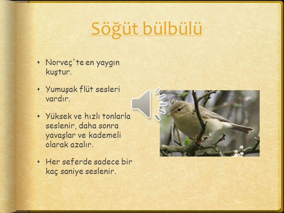 Söğüt bülbülü  Norveç'te en yaygın kuştur.  Yumuşak flüt sesleri vardır.  Yüksek ve hızlı tonlarla seslenir, daha sonra yavaşlar ve kademeli olarak