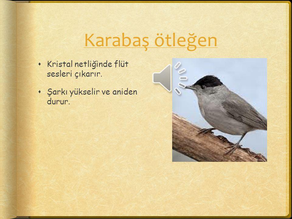 Bahçe bülbülü  Güçlü bir şarkısı vardır, yalnız sabit bir melodisi yoktur.