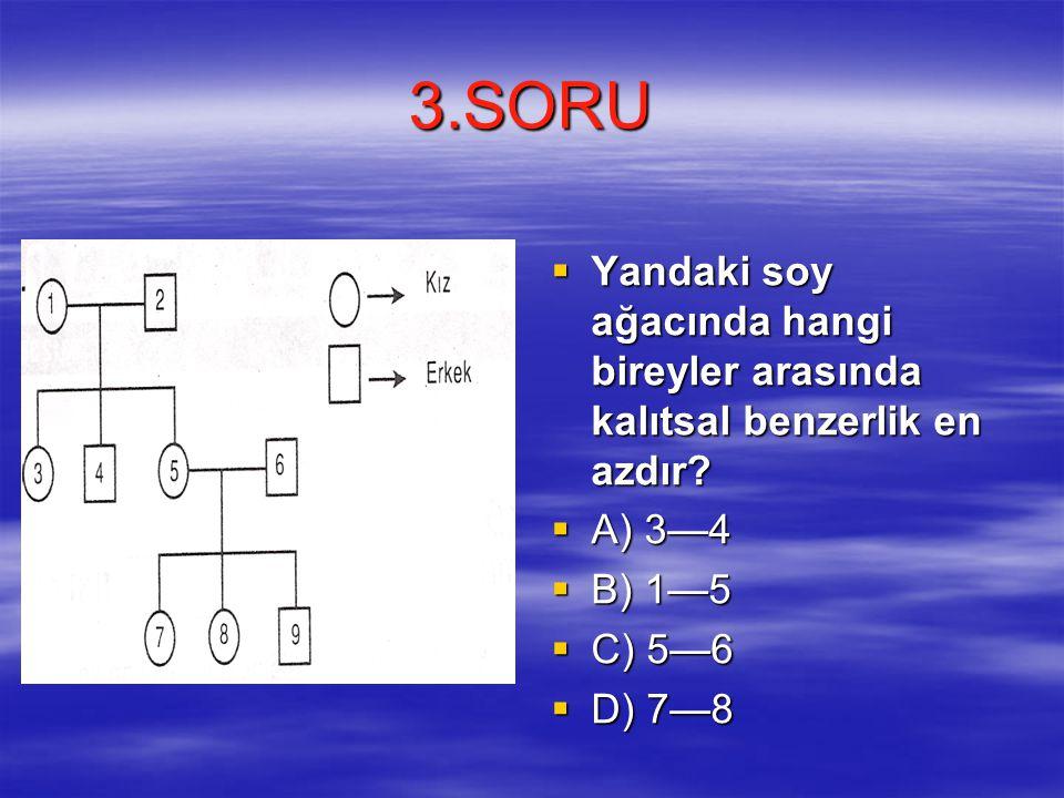 3.SORU  Yandaki soy ağacında hangi bireyler arasında kalıtsal benzerlik en azdır.