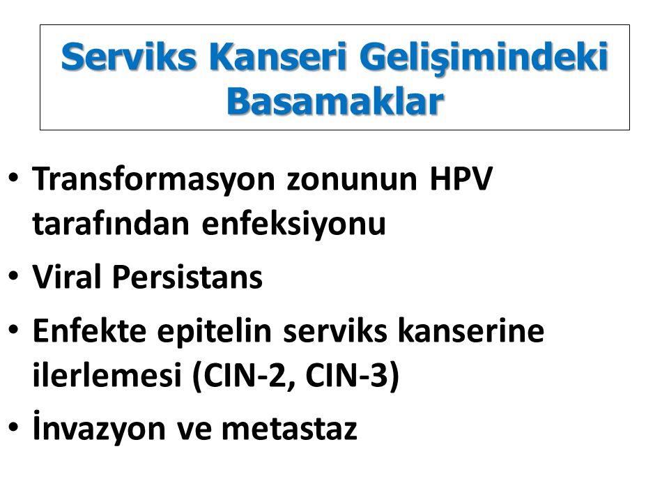 Serviks Kanseri Gelişimindeki Basamaklar Transformasyon zonunun HPV tarafından enfeksiyonu Viral Persistans Enfekte epitelin serviks kanserine ilerlem