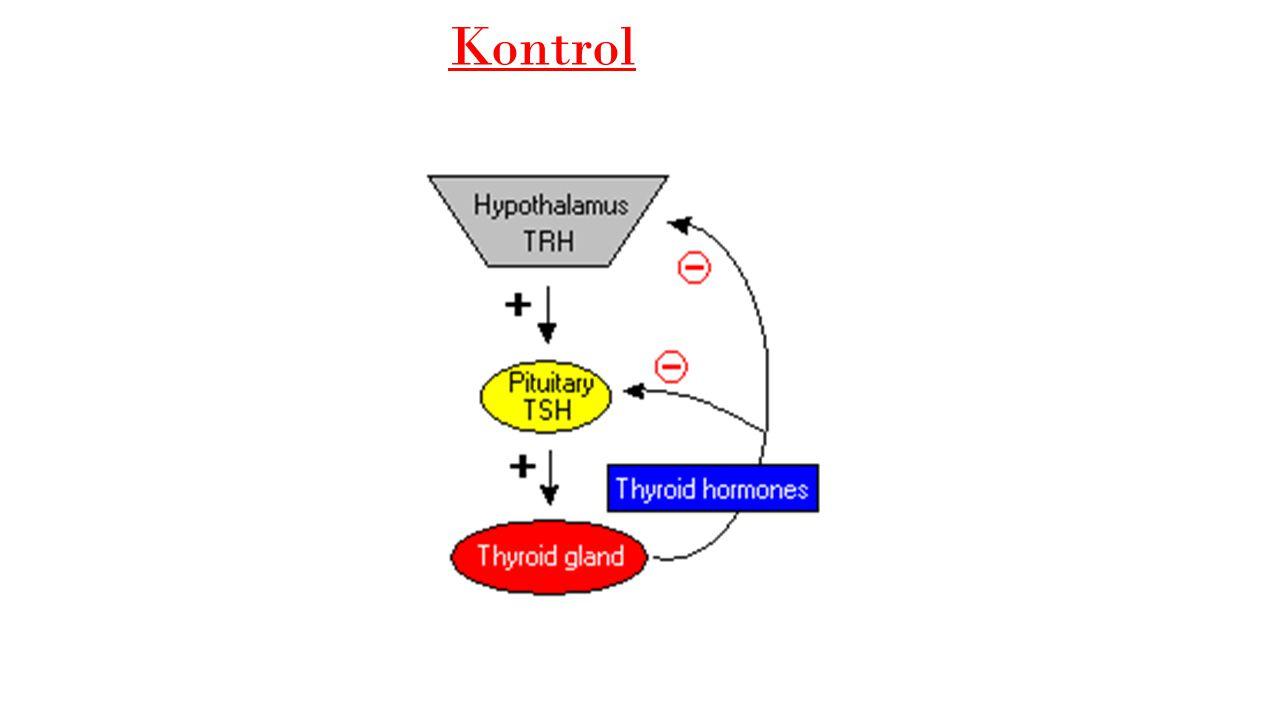 Tiroksin (T4)Tiriiyodotironin (T3) T4 hormonunda 4 tane iyot atomu, T3'te ise 3 tane iyot atomu vardır.