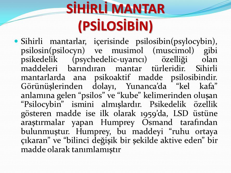 SİHİRLİ MANTAR (PSİLOSİBİN) Sihirli mantarlar, içerisinde psilosibin(psylocybin), psilosin(psilocyn) ve musimol (muscimol) gibi psikedelik (psychedeli