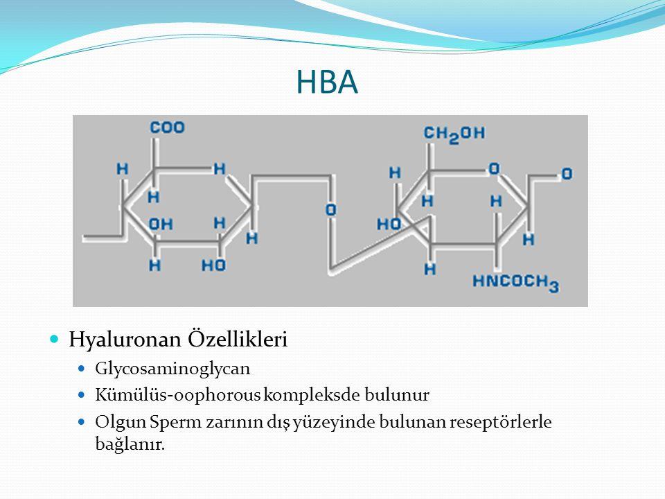 HBA Hyaluronan Özellikleri Glycosaminoglycan Kümülüs-oophorous kompleksde bulunur Olgun Sperm zarının dış yüzeyinde bulunan reseptörlerle bağlanır.