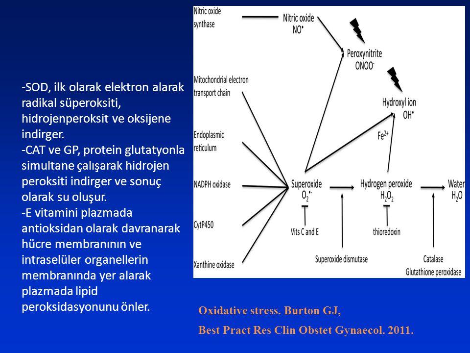Oxidative stress. Burton GJ, Best Pract Res Clin Obstet Gynaecol. 2011. -SOD, ilk olarak elektron alarak radikal süperoksiti, hidrojenperoksit ve oksi