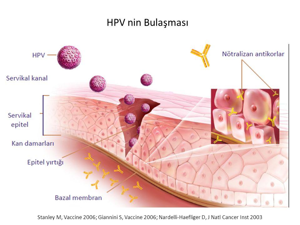 HPV nin Bulaşması Stanley M, Vaccine 2006; Giannini S, Vaccine 2006; Nardelli-Haefliger D, J Natl Cancer Inst 2003