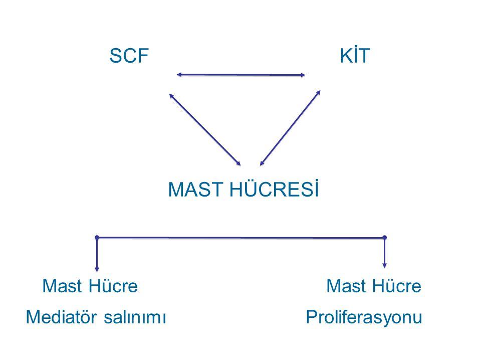 SCF KİT MAST HÜCRESİ Mast Hücre Mast Hücre Mediatör salınımı Proliferasyonu