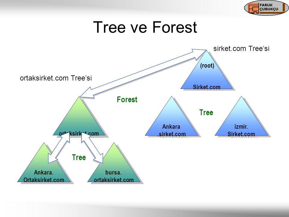 Tree ve Forest Sirket.com (root) izmir. Sirket.com izmir.