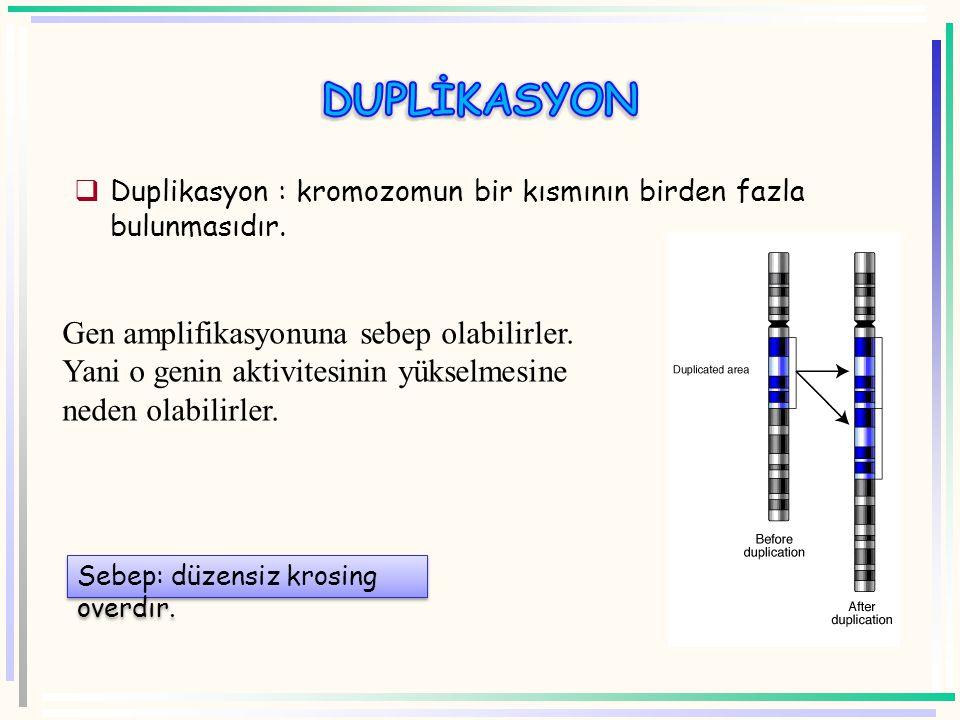 Kromozom Sentromer A B C D E F G H Genler E F A B C D G H