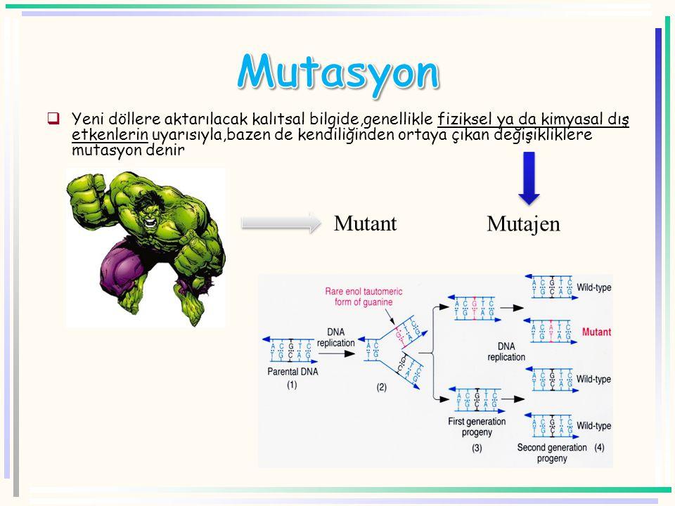  Yeni döllere aktarılacak kalıtsal bilgide,genellikle fiziksel ya da kimyasal dış etkenlerin uyarısıyla,bazen de kendiliğinden ortaya çıkan değişikliklere mutasyon denir Mutajen Mutant