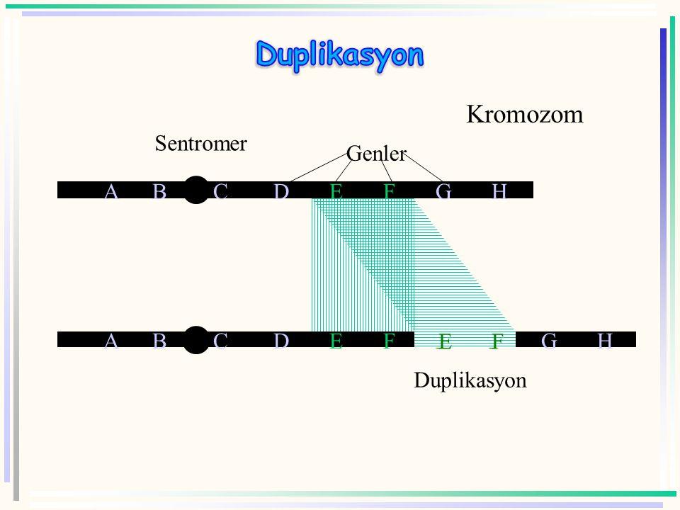 Duplikasyonun üç değişik özelliği bulunur.  Birincisi, duplikasyon geninin birden fazla kopyasının bulunmasını sağlayabilir.  İkincisi, delesyonlard