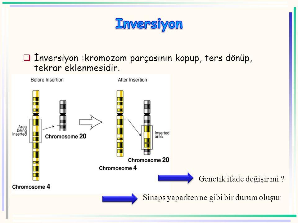A B C D E F E F G H Kromozom Sentromer A B C D E F G H Genler E F Duplikasyon