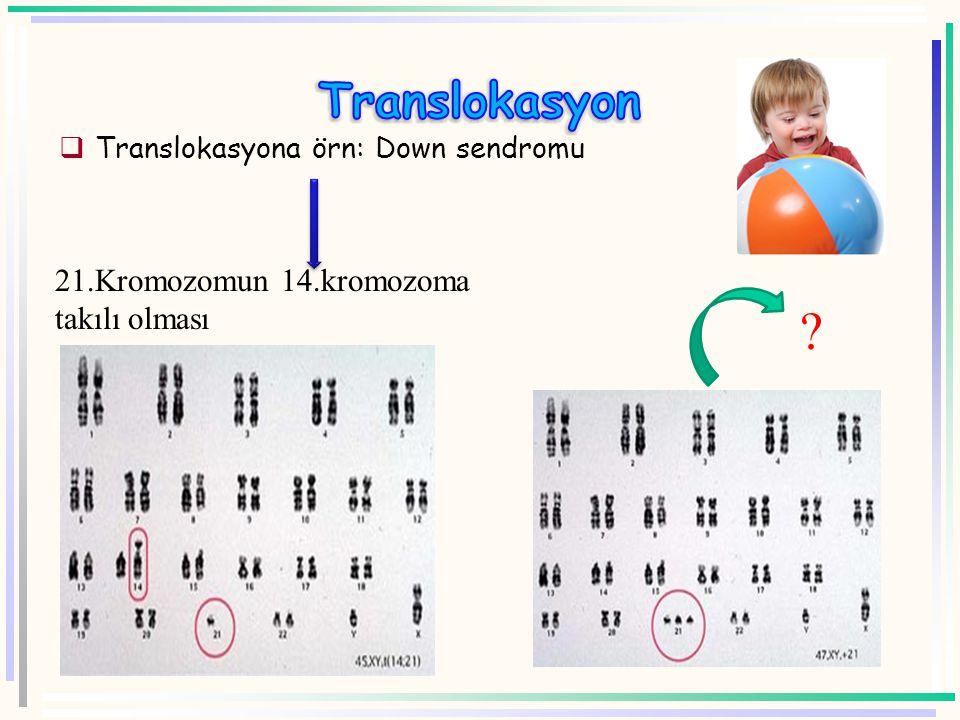  Translokasyon : kromozomun bir parçasının kopup başka bir kromozoma eklenmesiyle oluşur.