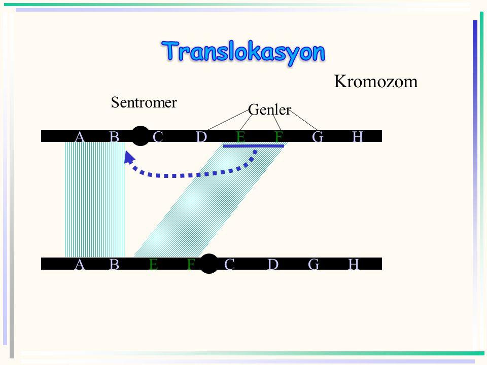  Translokasyona örn: Down sendromu ? 21.Kromozomun 14.kromozoma takılı olması