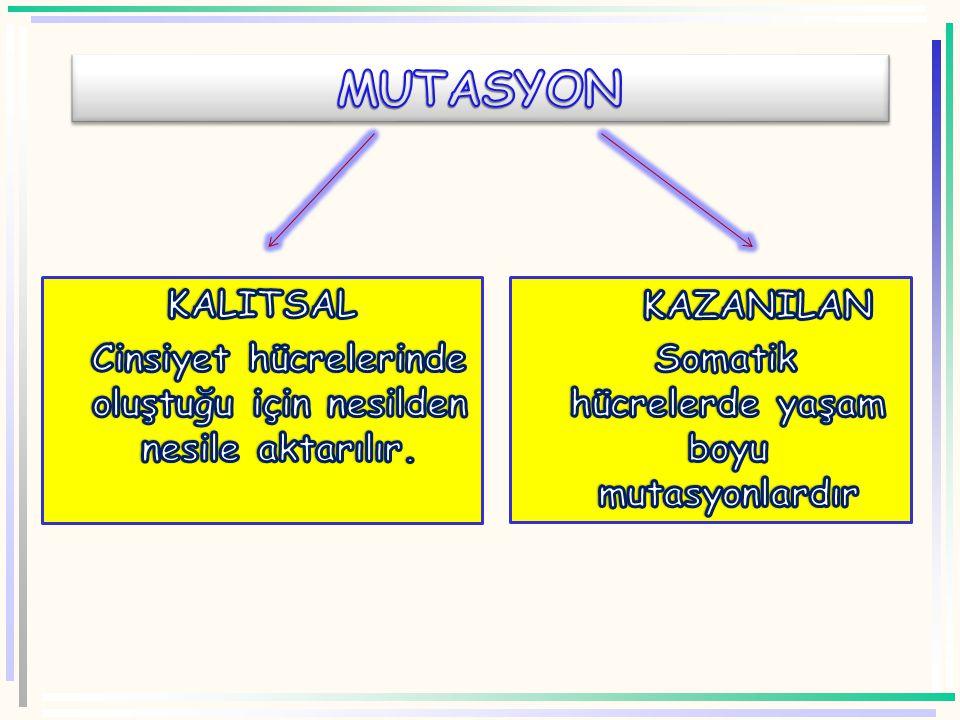 DELESYON DUPLİKASYON İNVERSİYON TRANSLOKAS YON