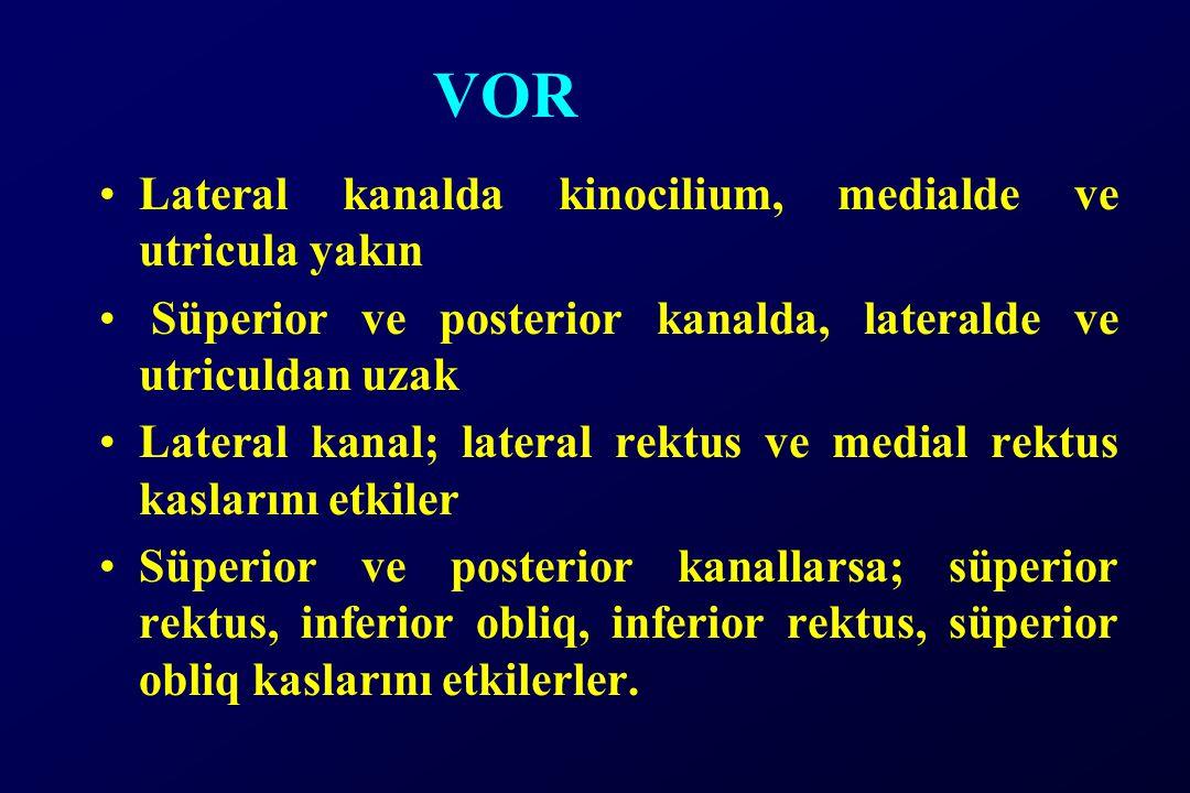 VOR Lateral kanalda kinocilium, medialde ve utricula yakın Süperior ve posterior kanalda, lateralde ve utriculdan uzak Lateral kanal; lateral rektus ve medial rektus kaslarını etkiler Süperior ve posterior kanallarsa; süperior rektus, inferior obliq, inferior rektus, süperior obliq kaslarını etkilerler.