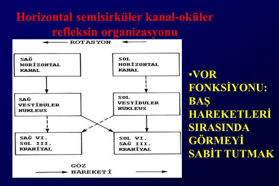 Horizontal semisirküler kanal-oküler refleksin organizasyonu VOR FONKSİYONU: BAŞ HAREKETLERİ SIRASINDA GÖRMEYİ SABİT TUTMAK