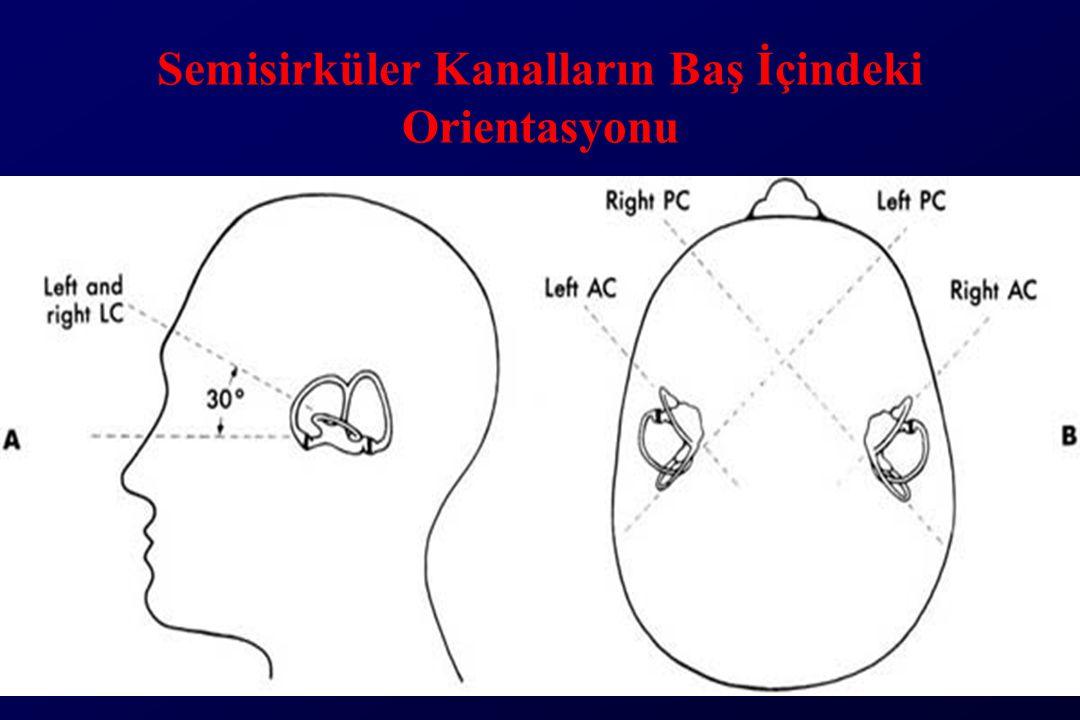 Semisirküler Kanalların Baş İçindeki Orientasyonu