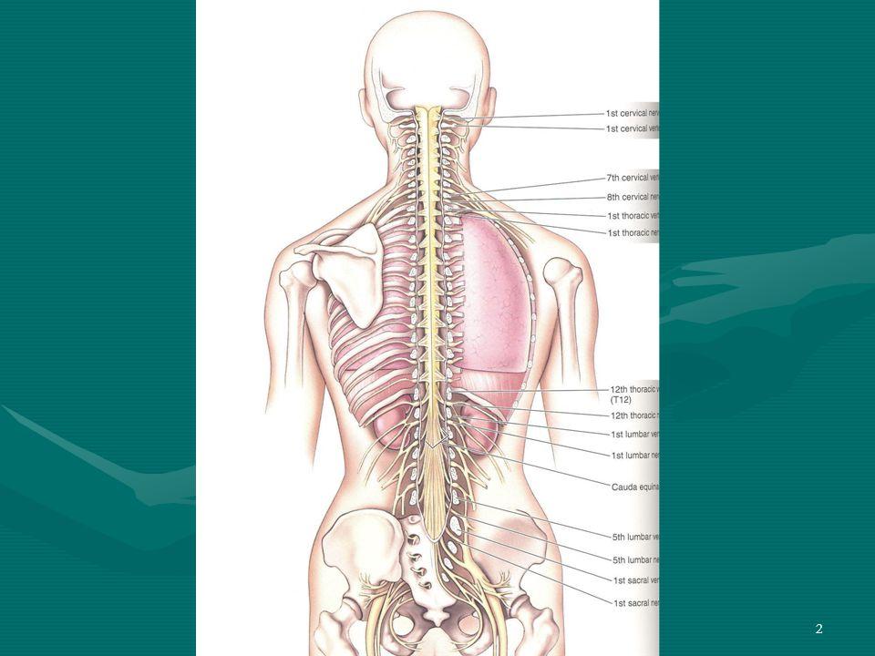 33 Santral Etkili Kas Gevşeticiler (Myörelaksanlar/Smazmolitikler) 3)Çeşitli İlaçlar KİNİN Yaşlılarda gelişen noktürnal (gece) kraplarını düzelttiği tesadüfen görülmüştür.