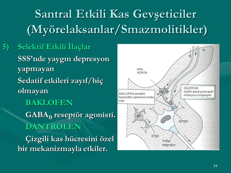 34 Santral Etkili Kas Gevşeticiler (Myörelaksanlar/Smazmolitikler) 5)Selektif Etkili İlaçlar SSS'nde yaygın depresyon yapmayan Sedatif etkileri zayıf/hiç olmayan BAKLOFEN GABA B reseptör agonisti.