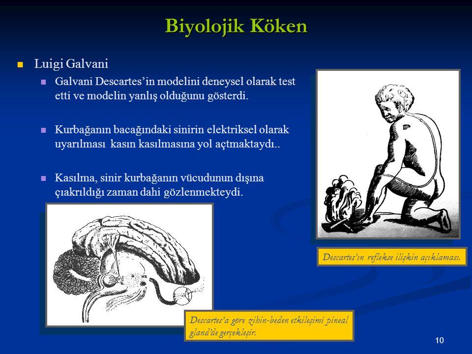 10 Biyolojik Köken Luigi Galvani Galvani Descartes'in modelini deneysel olarak test etti ve modelin yanlış olduğunu gösterdi.