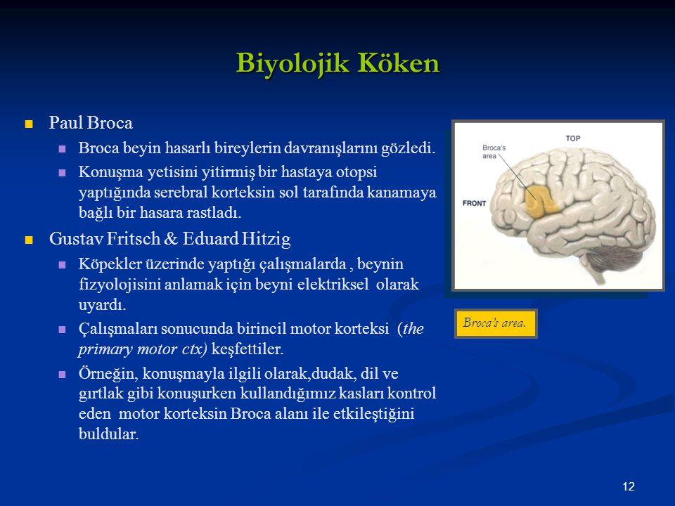 12 Biyolojik Köken Paul Broca Broca beyin hasarlı bireylerin davranışlarını gözledi.