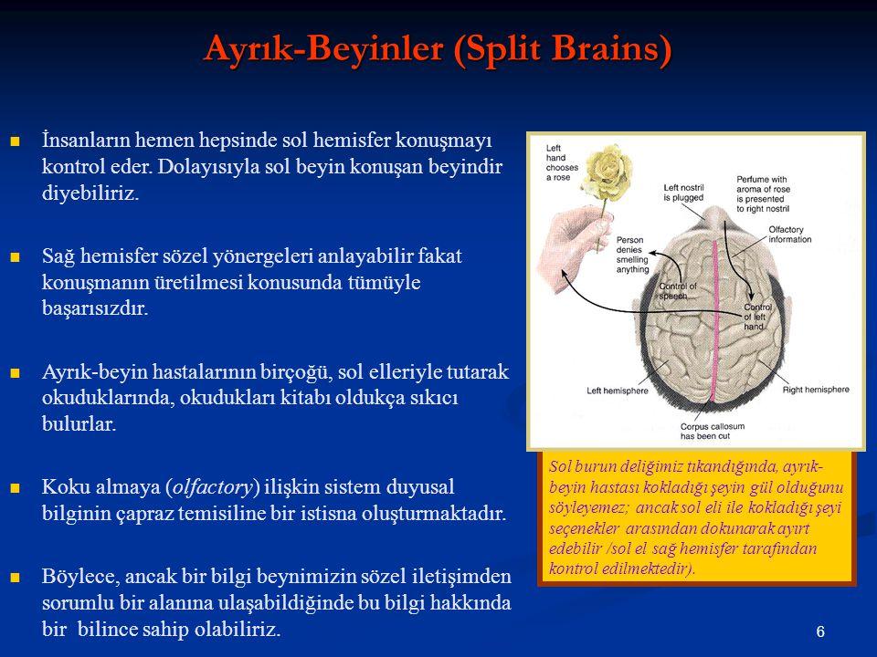 6 Sol burun deliğimiz tıkandığında, ayrık- beyin hastası kokladığı şeyin gül olduğunu söyleyemez; ancak sol eli ile kokladığı şeyi seçenekler arasından dokunarak ayırt edebilir /sol el sağ hemisfer tarafından kontrol edilmektedir).